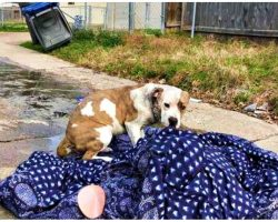 Family Dragged Discarded Things To Curb & Moved Away, Their Dog Was Among Them