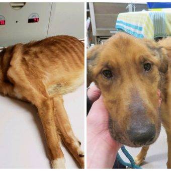 """Severely Malnourished Dog Is """"Worst Case Of Animal Abuse"""" Shelter Has Ever Seen"""