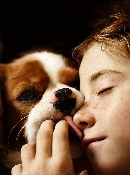 girl cavalier spaniel photo face dog licking