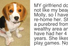 "Girlfriend Gave Her Partner An Ultimatum, Demands Either ""The Dog Goes"" Or ""She Goes"""