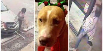 Cold-Blooded Woman Drops Her Dog Off At Groomer For A Bath & Doesn't Come Back