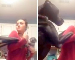 "Great Dane Was Not Very Happy When Mom Got A New Puppy And Threw A Funny ""Hissy-Fit"""