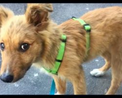 """Homeless Pup Wanted A Home So Badly, He'd Follow People Home. Then One Day, Someone """"Kicked"""" Him"""