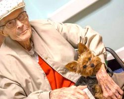 Hospice Program Helps Terminally Ill Patients Keep Their Beloved Pets Until The Very End