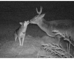 """Hunter Snaps Heartwarming Photos Of Missing Dog Getting """"Friendly"""" With A Wild Deer"""