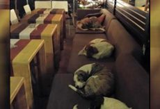 Instead Of Chasing Them Away, Coffee Shop Opens Its Doors To Stray Dogs Each Night