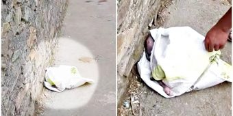 He Walked Home From Overnight Job & A Shriek Came From Dingy Plastic Bag