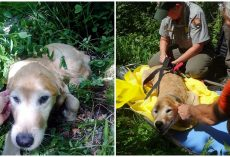 Lost Dog Couldn't Stop Smiling Once He Was Finally Found Among The Forest Trees