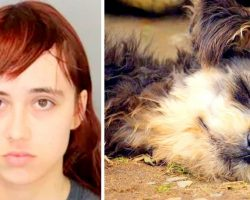 Teen Beheads Grandma's Dog, Hides Dog's Head In Dresser & Stuffs Heart In Freezer