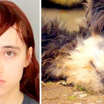 Teen Beheads Grandma's Dog, Hides Dog's Head In Dresser & Stuffs Heart In Freezer