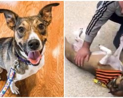 Man Went To Pet Adoption Event And Ended Up Finding His Long-Lost Best Friend