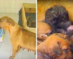 Kind Mama Dog Sees An Orphaned Panther Cub Crying, Welcomes Him Into Her Litter