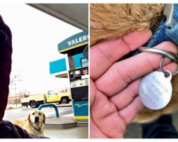 """Man Found A """"Lost"""" Dog, Tries To Help And Reads The ID Tag"""
