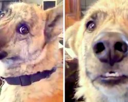 Man Has A Conversation With His Dog And Hilariously Teases Him About Food