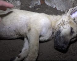 Man Located Unconscious Puppy In A Crumbling House And Can't Rouse Him