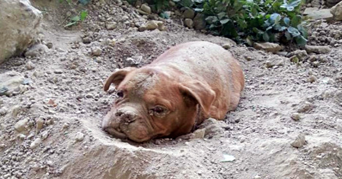 """Man Tried To Bury His Dog Alive Because He """"Didn't Want ..."""
