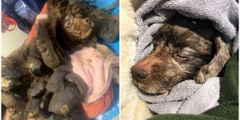She Had To Be Euthanized After Suffering In Cold With 19 Lbs Of Feces-Matted Fur
