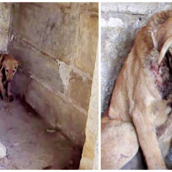 Pained And On His Own, Puppy Sought Refuge In One Place He Felt Closer To God