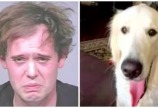 Man Stabs Service Dog Over 100 Times With Sharp Objects Before Cutting Its Neck