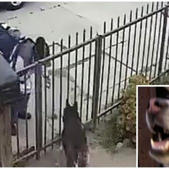 Postal Worker Pepper-Sprays Husky In Eyes After He Greets Her With Wagging Tail