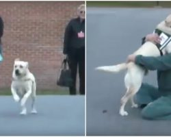 Soldier's Service Dog Joyfully Reunited With The Inmate Who Trained Him