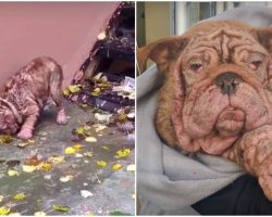 Bulldog Baby With Black-Heart Owner Ate Leaves To Stay Alive
