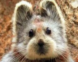 Rare Animal Known As The 'Magical Rabbit' Is Spotted For The First Time In 20-Years