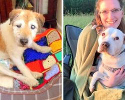 Retired Nurse Opened A Hospice For Dying Senior Dogs Who Are Dumped Without Love