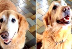 Sick Dog Goes Bonkers With Happiness When She Learns That She Doesn't Have Cancer