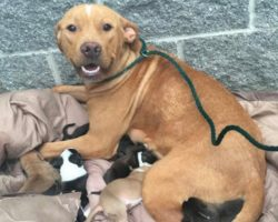 A Mother Dog And Her 10 Newborn Puppies Were Dumped At The Doorstep