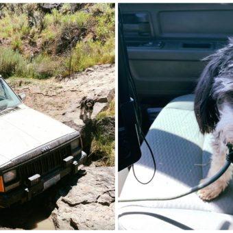 Stranded In Desert For 4-Days, Senior Citizen And 2 Dogs Survived On Instincts
