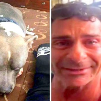 Dog Is Stolen & Missing For A Year, Dad Finds Him Just 2 Days Before Being Put Down