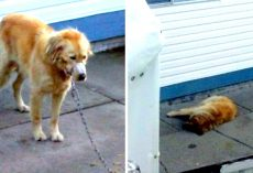 Town Refused To Help Poor Dog Next Door, So Neighbors Break Into Yard To Rescue The Dog