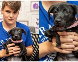 Unwanted Pup Born With 6 Legs Finds Home With A Bullied Teen Yearning For A Friend