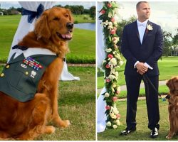 Devoted Service Dog Stands By Wounded Veteran's Side As 'Best Man' At Wedding