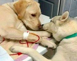 Veterinarian Has A 'Comfort Dog' Assistant That Helps Ease Sick Dog Patients To Know Everything Will Be Alright