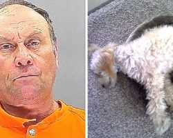 Vindictive Neighbor Shoots And Kills 72-Year-Old Veteran's PTSD Support Dog