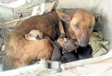 Woman Heard Crying And Found Newborn Human Baby Tucked In Between Litter Of Stray's Pups