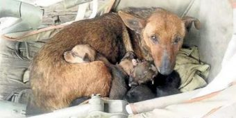 Woman Heard Crying, Found Newborn Human Baby Tucked In Between Litter Of Stray's Pups