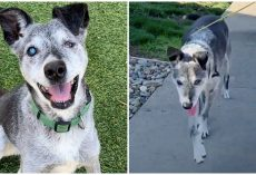 19-Year-Old Shelter Dog Still Has Pep In His Step & Longs For A Loving Home