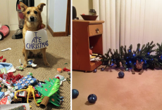 20 Dogs And Cats Who Decided To Ruin Christmas For Everyone