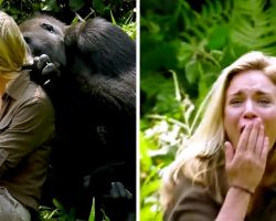 6-Yrs After Raising Wild Gorilla He Introduced His Wife & Despite Warnings, She Got Too Close