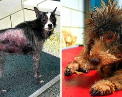 Evil Owners Hoard & Torture 68 Dogs & Rabbits In Filthy Hell With No Food Or Water