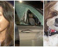 Thief Waited To Smash Car Window While Dog Mom Ran In Grocery Store