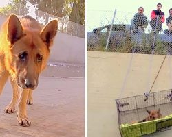 Dog Dumped 20-ft Below With No Food, Massive Rescue Effort Finally Brings Him Out