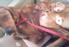 Woman Finds Dog On The Street Covered In Sores And Takes Him In
