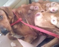 Stray Dog Found Covered In Sores On The Street, Good Samaritan Takes Him In