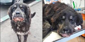 Virus Overwhelmed His Owner So He's Left, Starves As Sores Engulf His Mouth