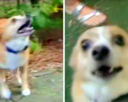 Meter Reader Unnecessarily Pepper Sprays Harmless 10-Pound Dog Because He Barked