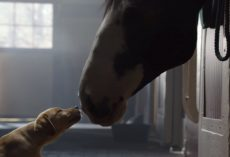 Budweiser's 2014 Super Bowl Commercial, Puppy Was Kept Away From Her Best Friend